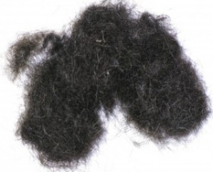 black-dog-hair3-large.jpg